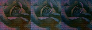 Coding the rose triptych by Beverley Bloxham