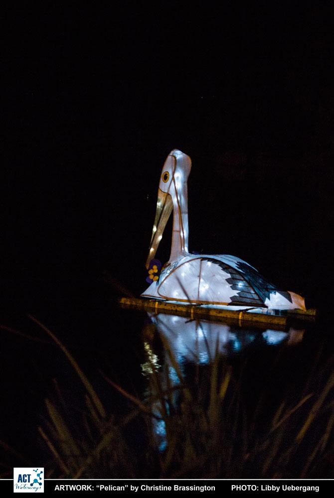 Pelican at Toowoomba Water Bird Habitat