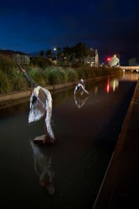 Nights shot of wading birds in West Creek